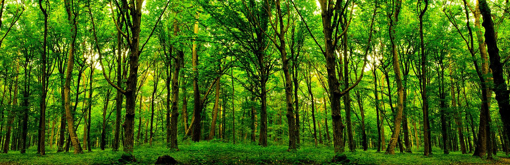 Energieverbund Eschenbach AG, Wald, Heizen mit Holz