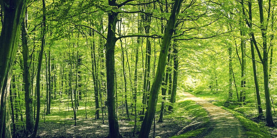 Fernwaerme, Wald, EVB Eschebach AG
